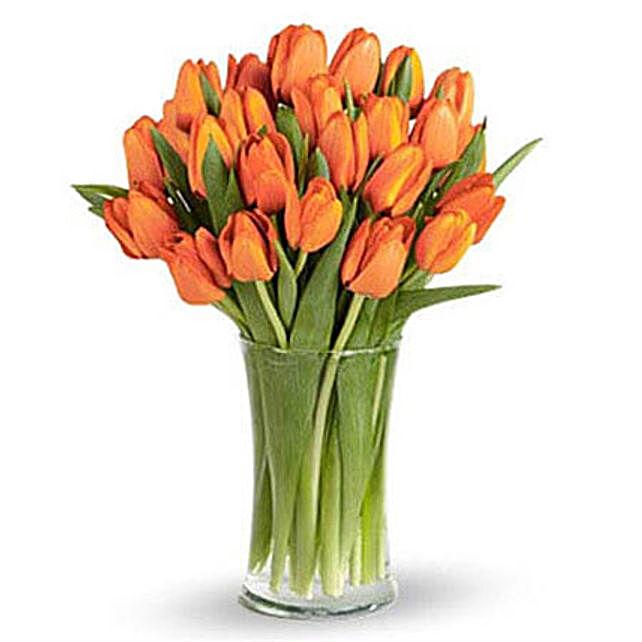 Orange Tulip Collection