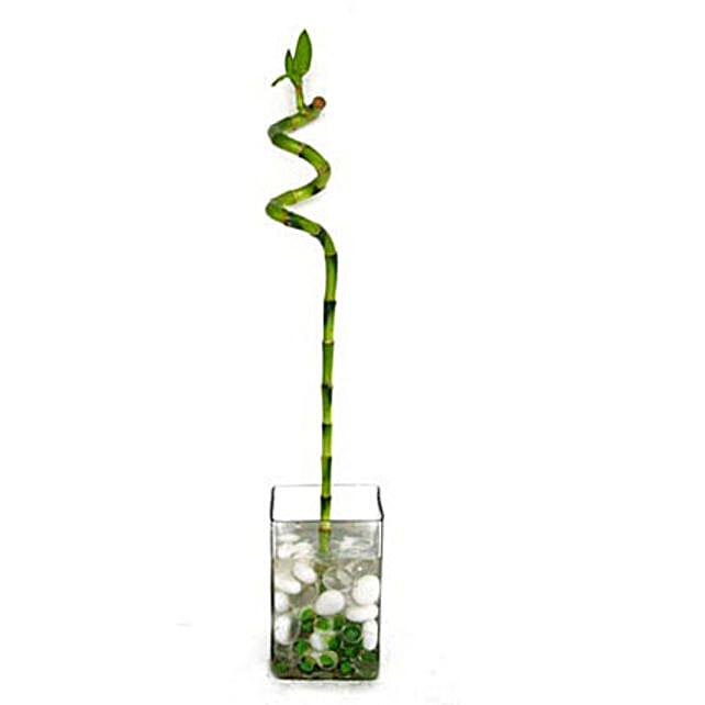 Spiral Stick Bamboo